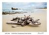 Drift wood log, Gougamma, South Africa