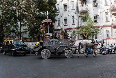 These wonderful old horse drawn carriges are about to disappear from Mumbai.