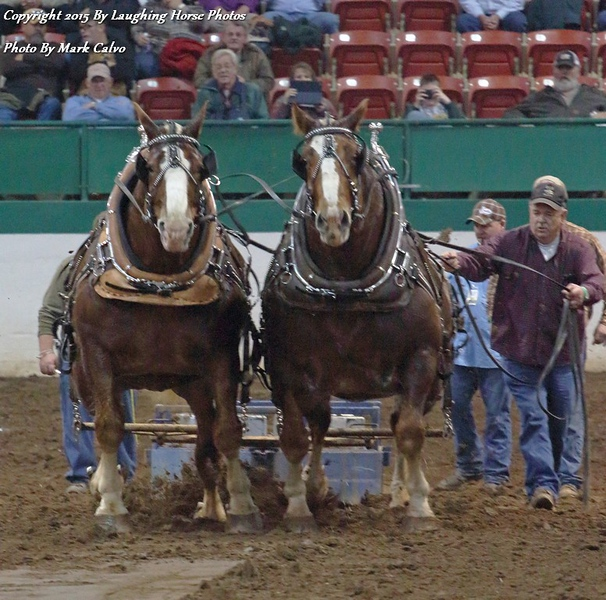 20150206 Raleigh Horse And Mule Pull 243 E2