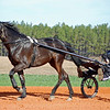 This horse's gait is trotter.  Right front and left back move at the same time.  No leg straps.
