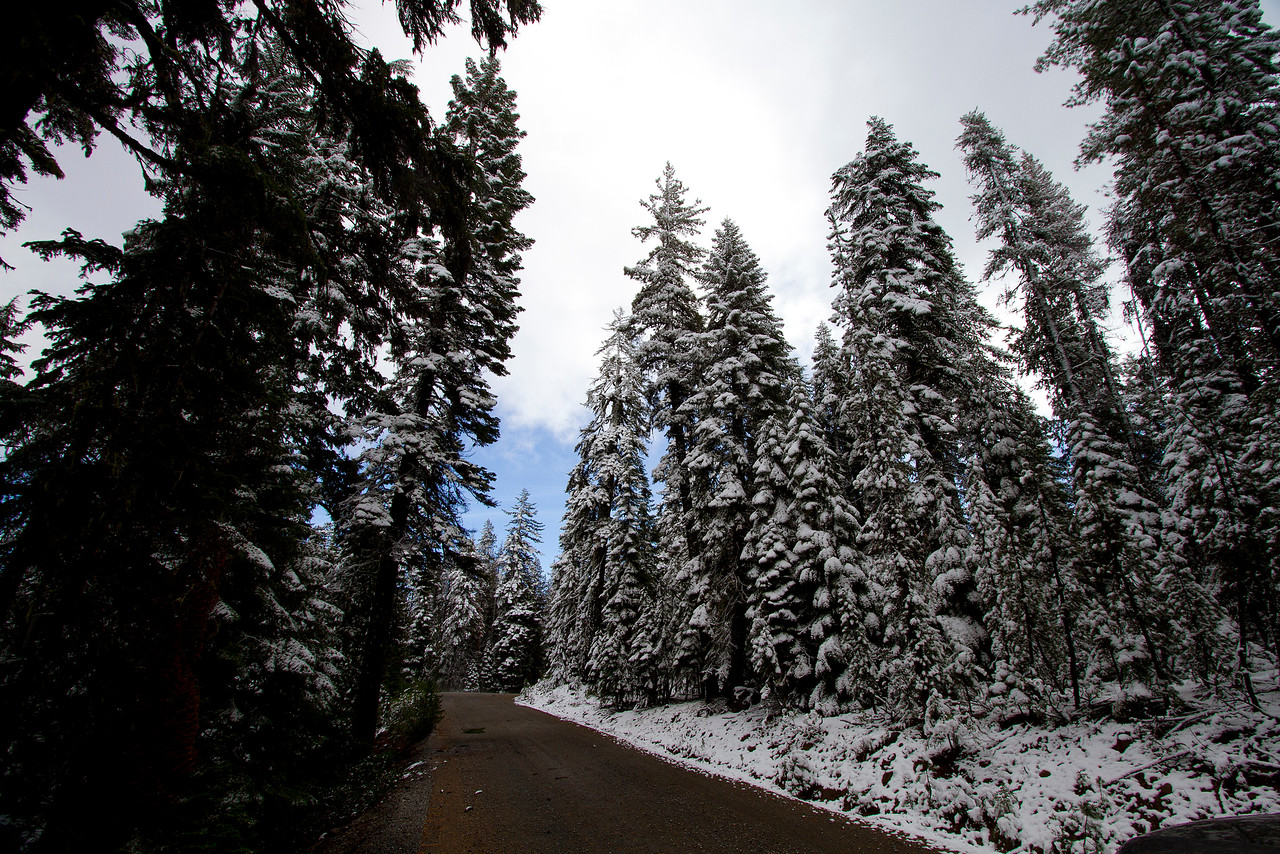 2 Snowy Road to Fourmile Lake 2 IMG_9367