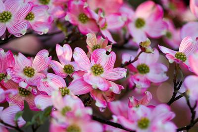 Pink Palette Color
