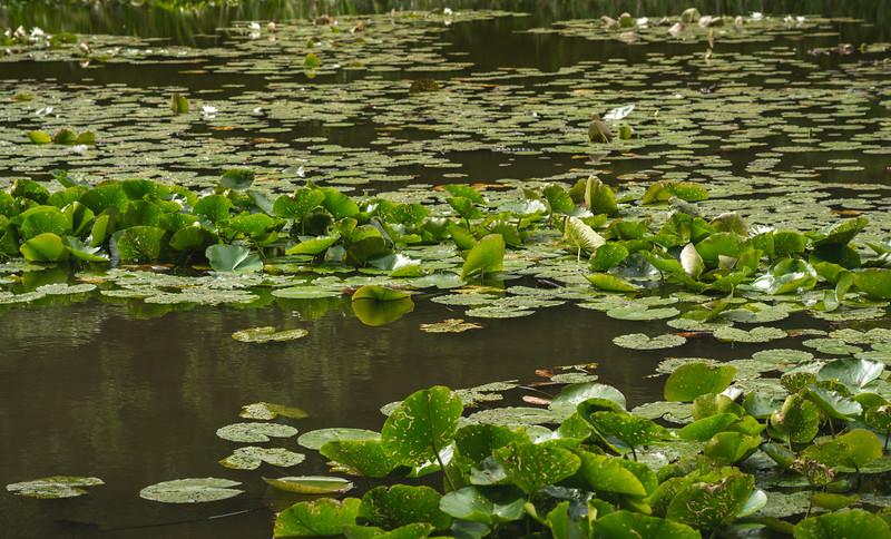 Lilililies