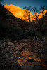 Sunrise Canyon Junction Bridge Area - Zion National Park, Utah - Andrew Ehrlich - November 2013