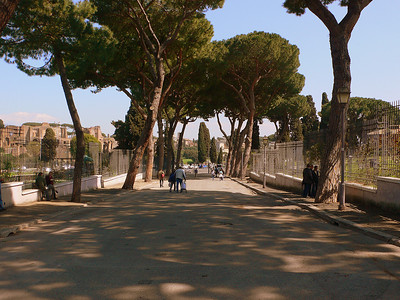Stone pines line the entrance of the Via di Valle Murcia
