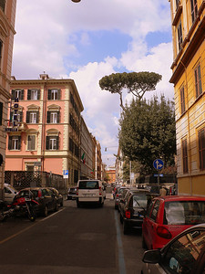 On the Via Castelfidardo. An Italian Stone Pine juts out of a small park on the street.