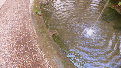 Ripples from the fountain on the grounds of the Terme di Diocleziano‎.
