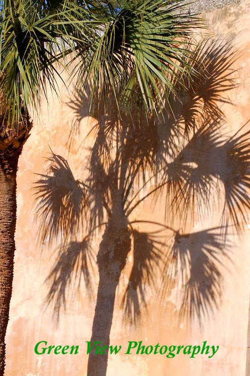 Palm Tree Shadow