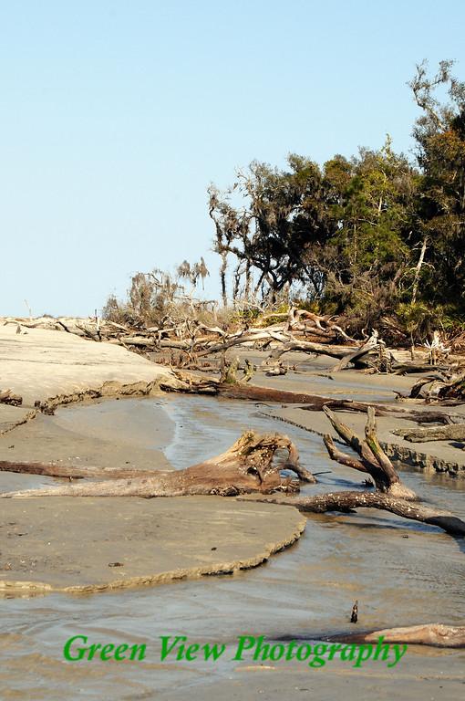 Driftwood Beach Portrait