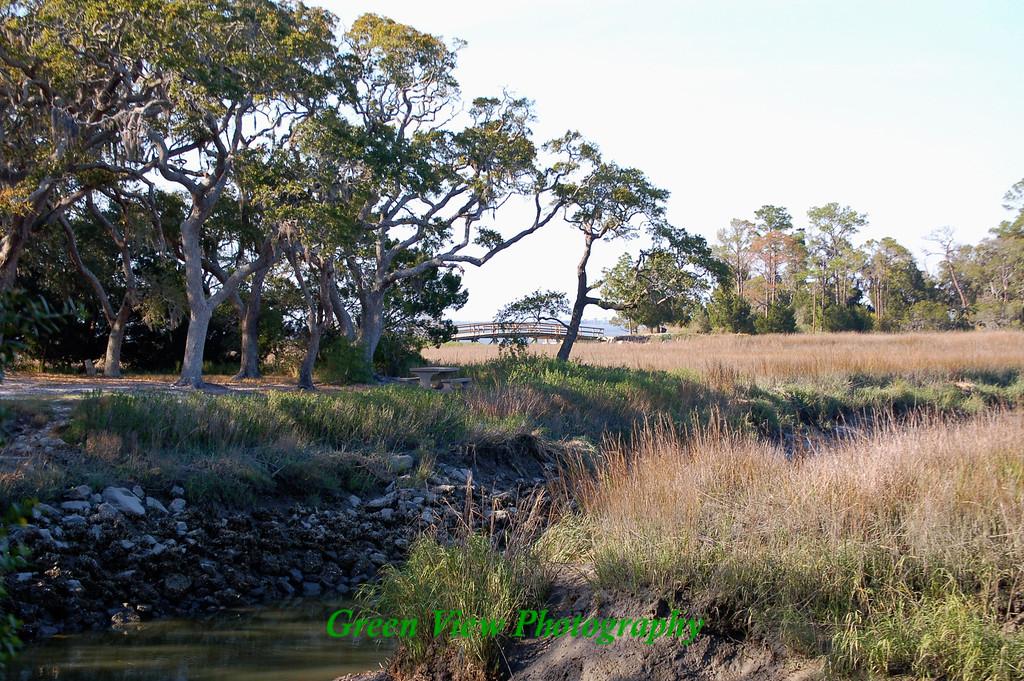 Swamp Meadow