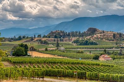 Vineyards, Naramata Bench, BC