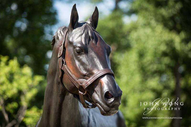 Saratoga Springs, NY - Race Horse - John Wong Photography
