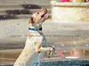Waylon, owned by Randi Kamper, enjoys the water at the City of Keller's Doggie Dunk.