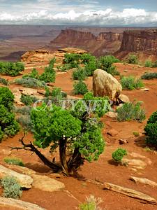 Needles Overlook Canyonlands N P Utah 4