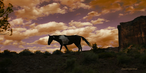 Mustangs at Canyon de Chelly, Arizona