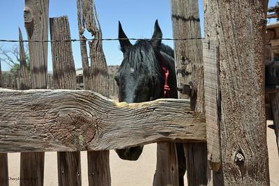 Hubbell Trading Post, National Historic Site, Ganado, Arizona