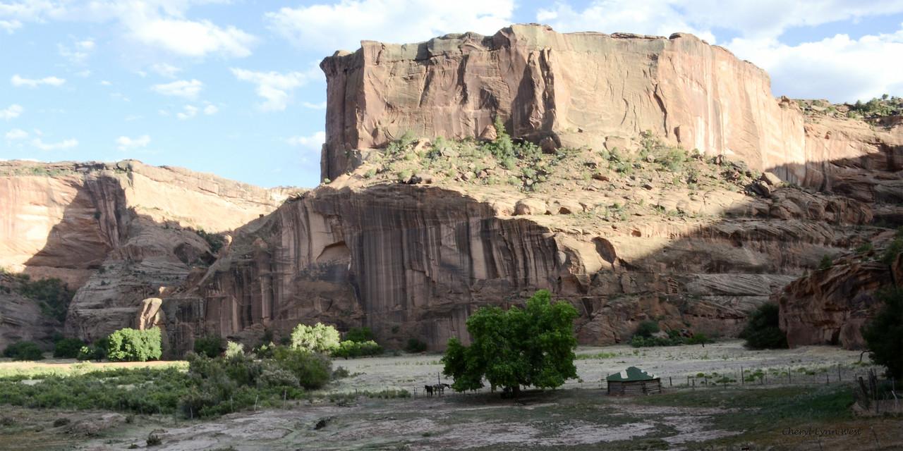 Canyon de Chelly, Arizona - Hogan and mustangs, canyon floor
