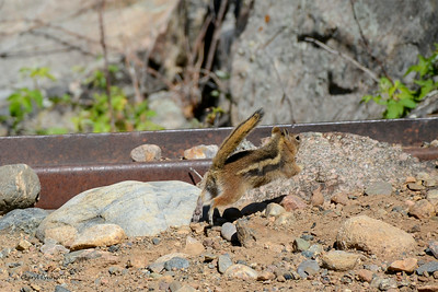 Durango & Silverton Narrow Gauge Railroad, Colorado - Chipmunk - time to leave