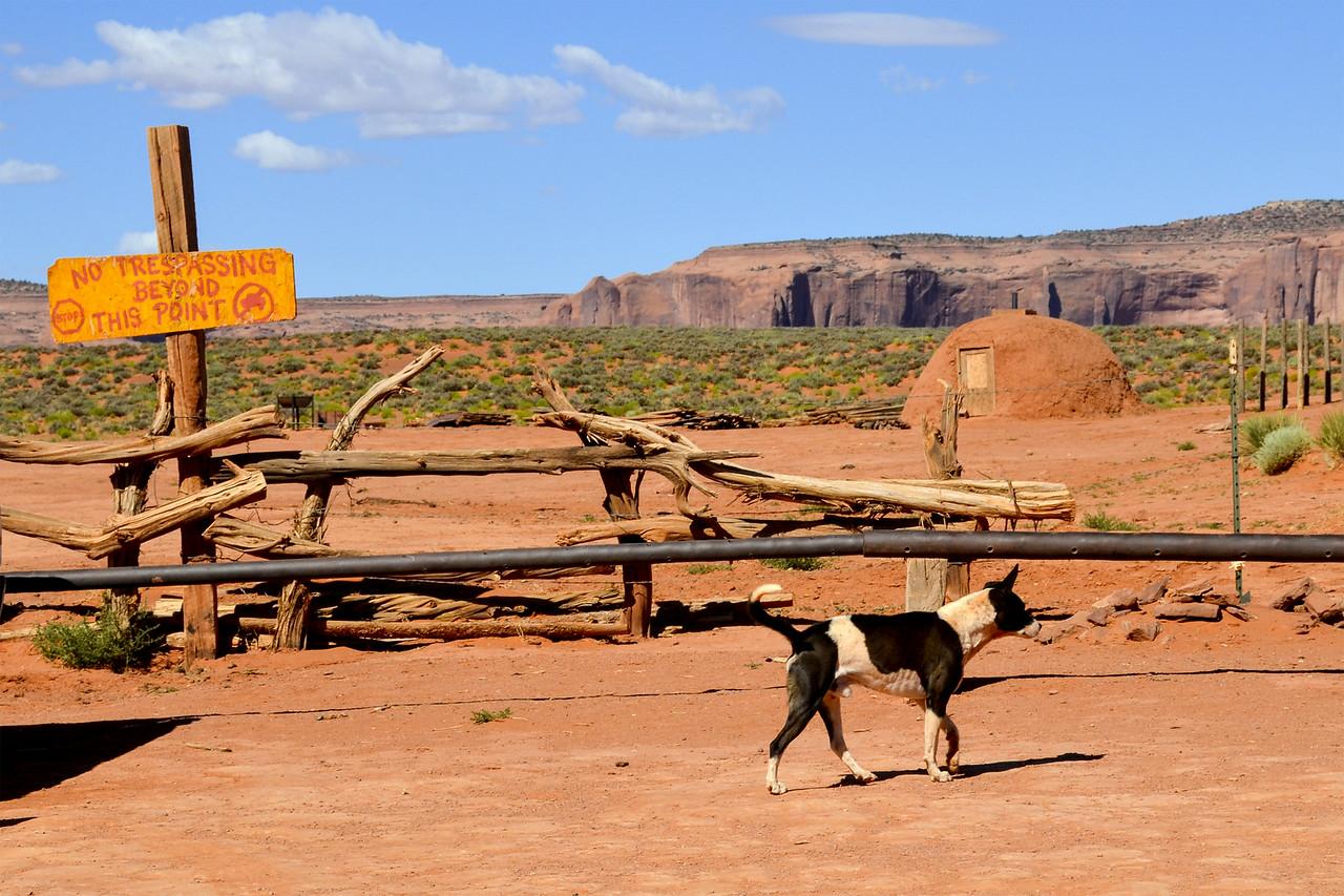Stray dog and hogan near John Ford's Point, Monument Valley, Arizona