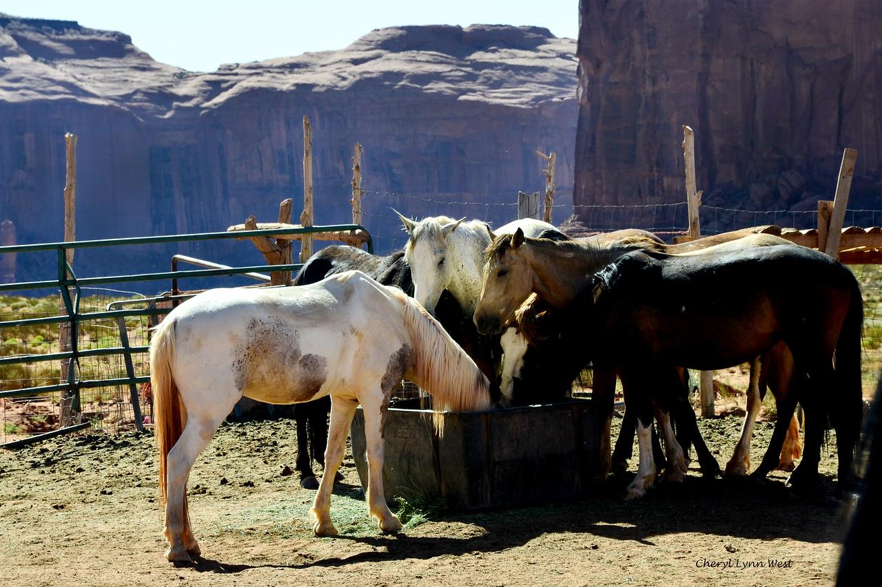 Native American horses at corral near John Ford's Point, Monument Valley, Arizona