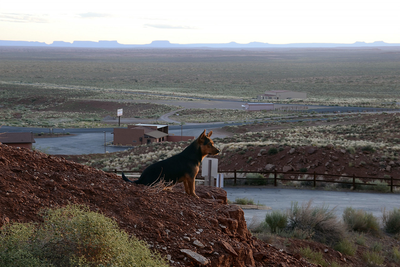 Goulding Lodge, Utah - Stray dog, looking down the hillside
