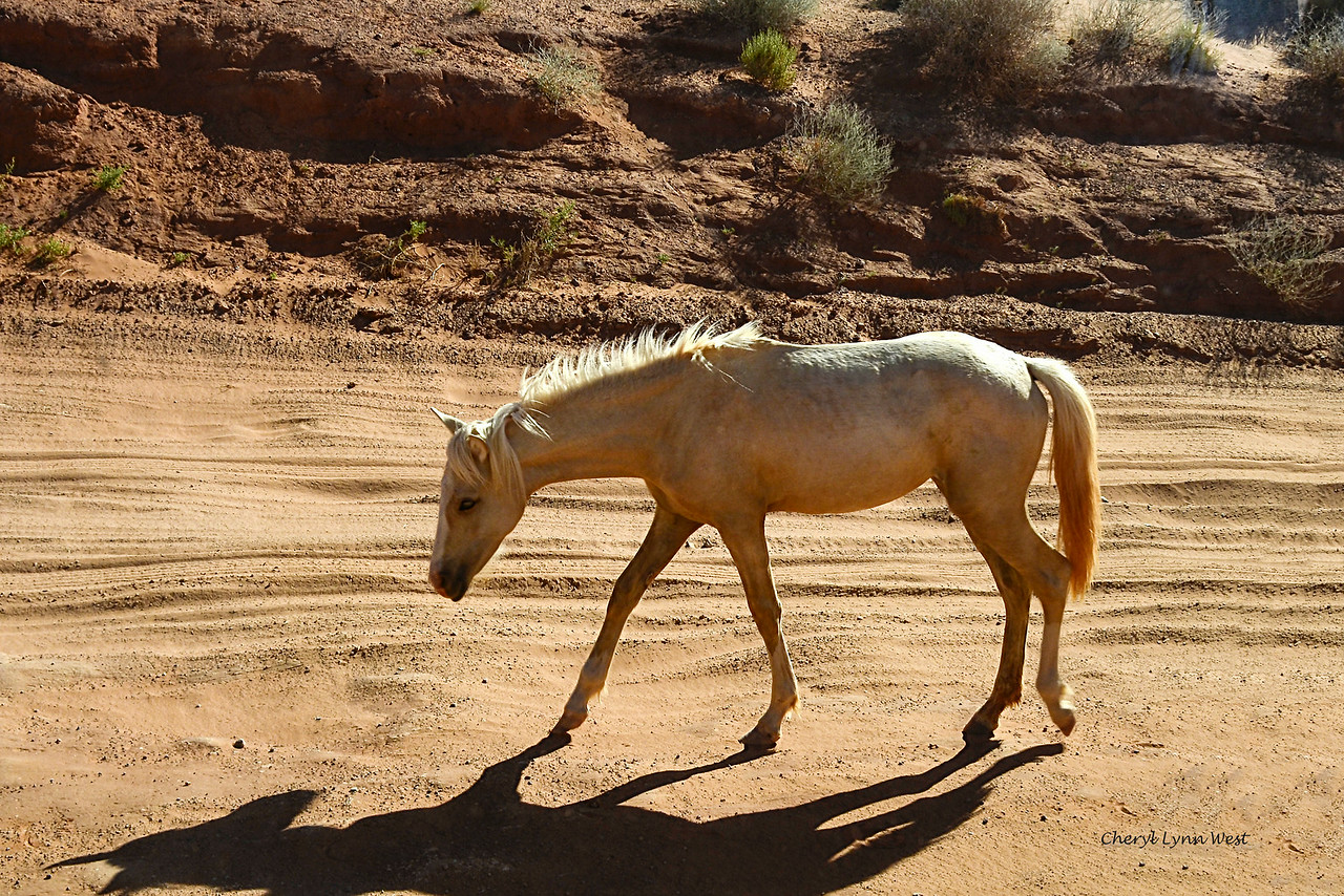 Native American horses in Monument Valley, Arizona