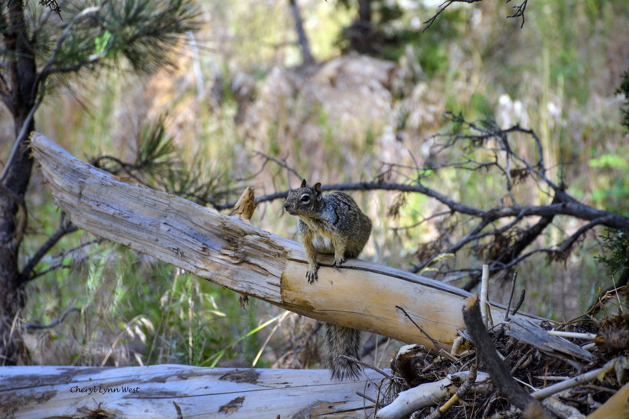 Bandelier National Monument, Los Alamos, New Mexico - Curious squirrel