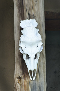 Truchas, New Mexico - skull hanging on post at the Montez Gallery