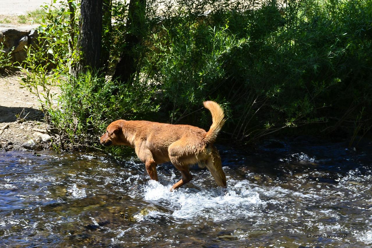 Taos Pueblo, New Mexico - Stray village dog