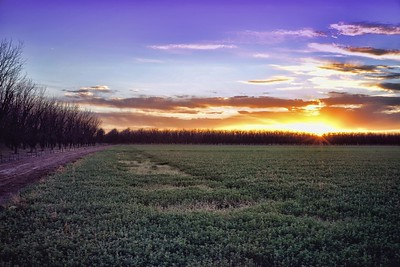 Sunset on a Mesilla Farm