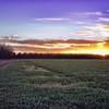 Sunset on a Mesilla Farm