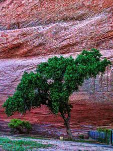 Tree 2780_edited-1