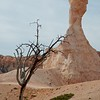 Tree and Hoodoo