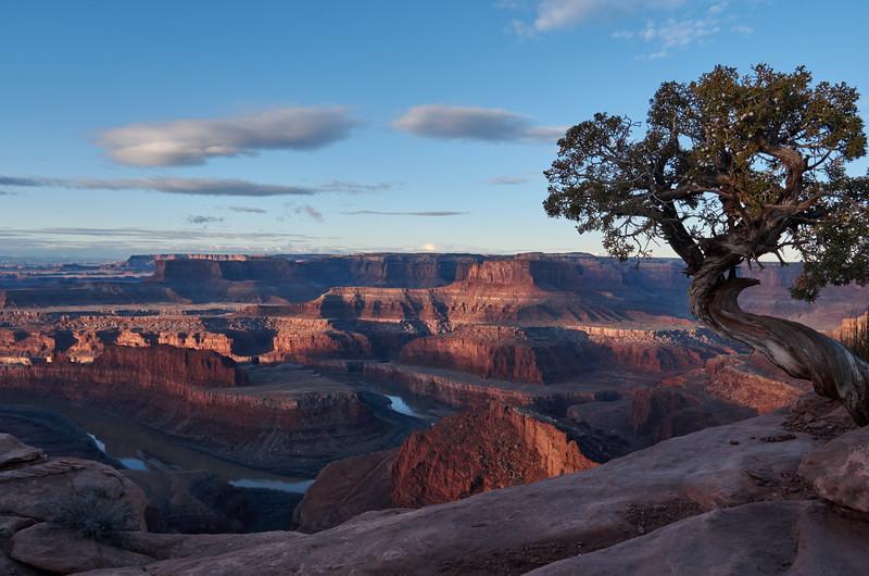 Pine tree overlooking the Colorado river