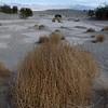 Tumbleweed on the Mesquite Dunes