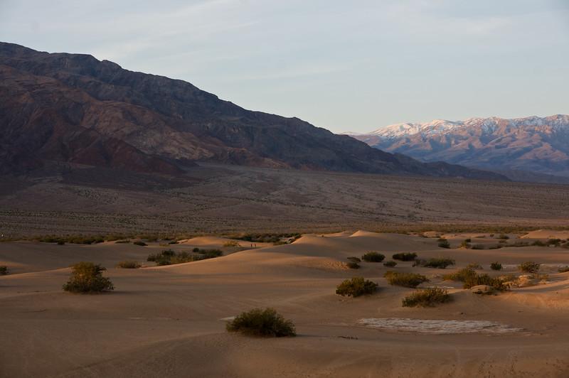 Mesquite Dunes #5