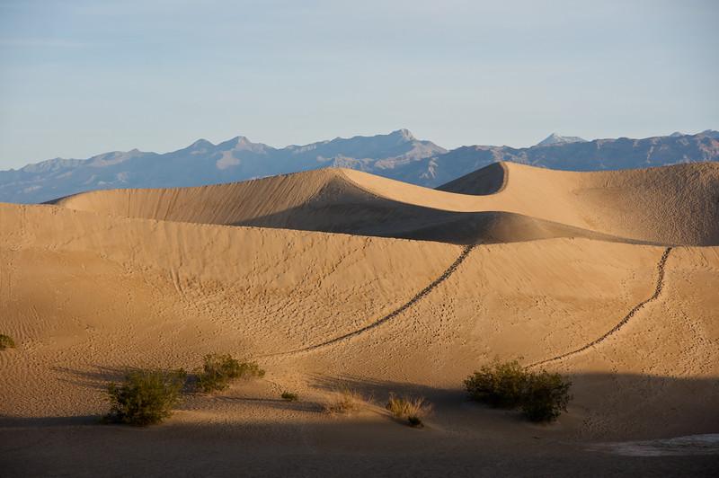 Tracks on the Mesquite Dunes