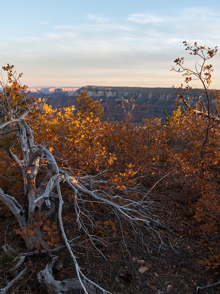 Deadwood, Evening Light