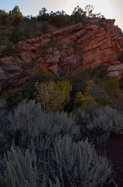 Sagebrush on Kolob Canyon