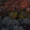Sagebrush on Kolob Canyon