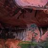 Taylor Creek Arch #2
