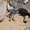 Poshuouinge flowers