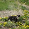 Tierra Amarilla cat