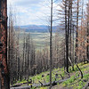 The area around Los Alamos and Jemez, including the Valle Caldera, were devastated by wildfires during the 2011 season. Over 150,000 acres of pine forest burned. Coyote Call trail, Valle Caldera, NM