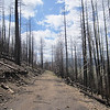 The area around Los Alamos and Jemez, including the Valles Caldera, were devastated by wildfires during the 2011 season. Over 150,000 acres of pine forest burned. Coyote Call trail, Valles Caldera, NM