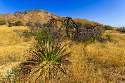 Coronado National Forest