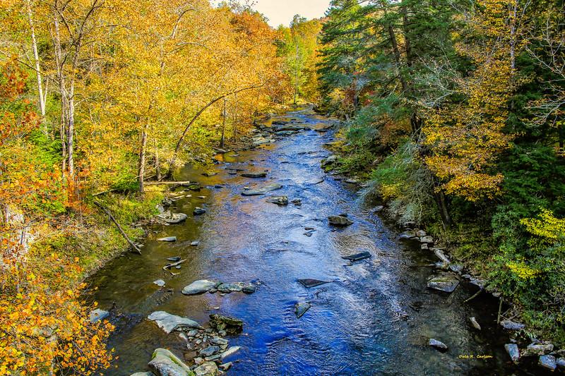 Guest River Autumn