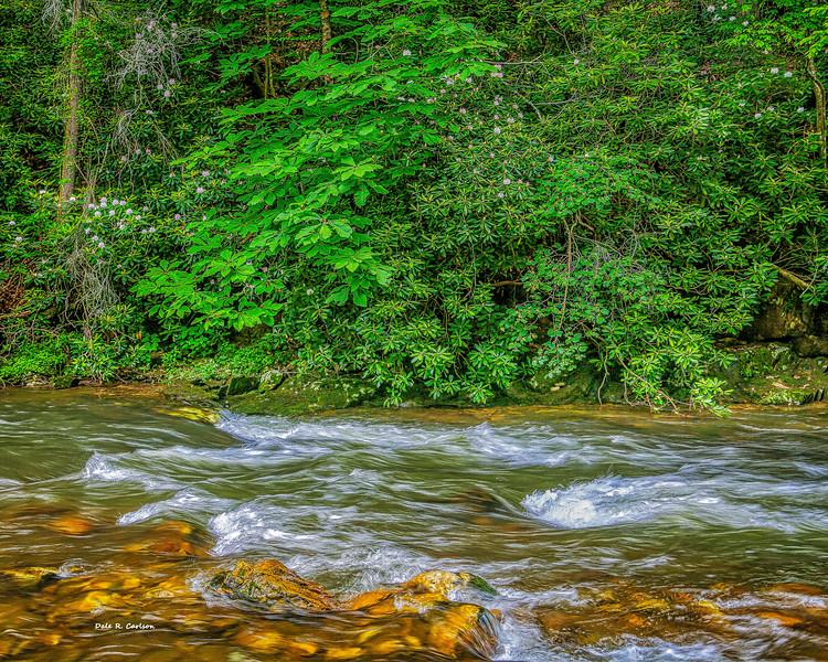 Rosebay River