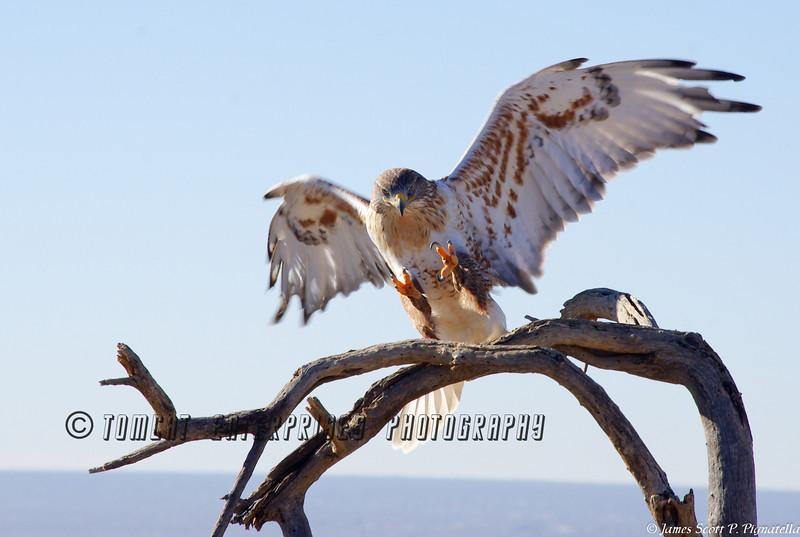 Falcon, Incoming