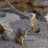 Dynamic Duos - Bobcats